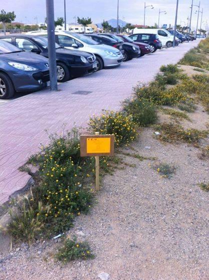Cartellets i herbes